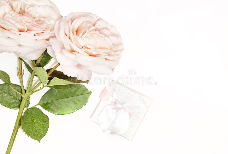 Dia do `s da matriz Dia do `s das mulheres Dia do ` s do Valentim, fundo do aniversário Rosas cremosas brancas e, caixa de presen foto de stock royalty free
