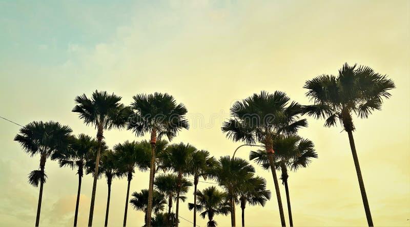 Dia ensolarado bonito nos parques exteriores fotografia de stock royalty free