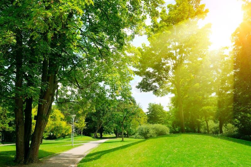 Dia ensolarado brilhante no parque Os raios de Sun iluminam a grama verde e o tr fotografia de stock royalty free