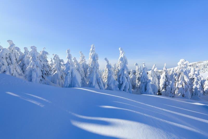 Dia ensolarado do inverno frio Misterioso, secreto, fantástico, mundo das montanhas No gramado coberto com a neve as árvores agra fotos de stock