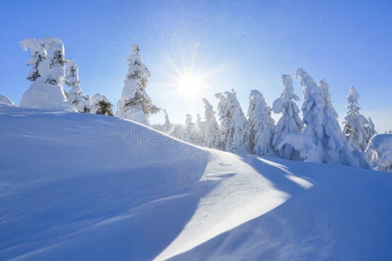 Dia ensolarado do inverno frio Misterioso, secreto, fantástico, mundo das montanhas No gramado coberto com a neve as árvores agra fotografia de stock royalty free