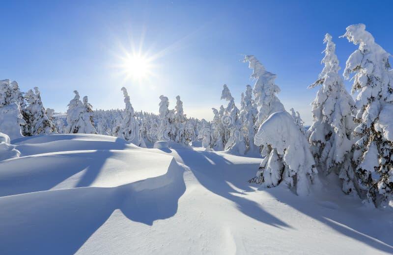 Dia ensolarado do inverno frio Misterioso, secreto, fantástico, mundo das montanhas No gramado coberto com a neve as árvores agra foto de stock