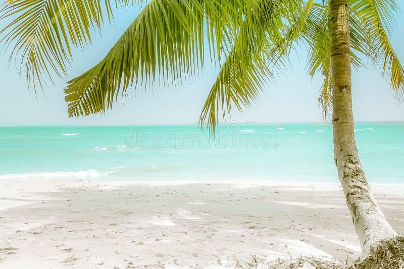 Dia ensolarado em praia tropical surpreendente com palmeira imagem de stock royalty free