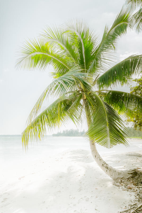 Dia ensolarado em praia tropical surpreendente com palmeira fotografia de stock royalty free
