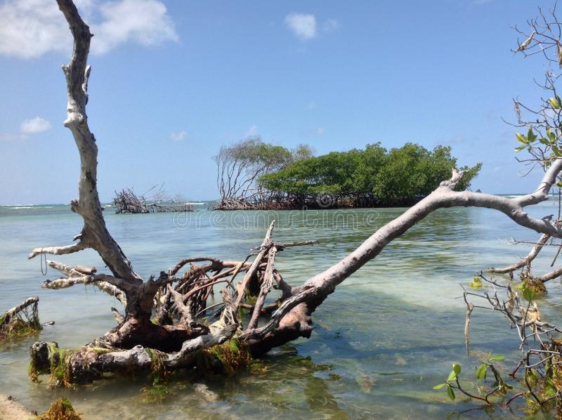 Dia ensolarado na praia dos manguezais foto de stock