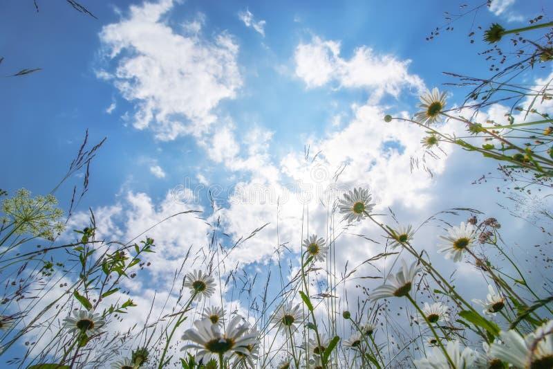 Dia ensolarado surpreendente no prado do verão com wildflowers fotografia de stock royalty free