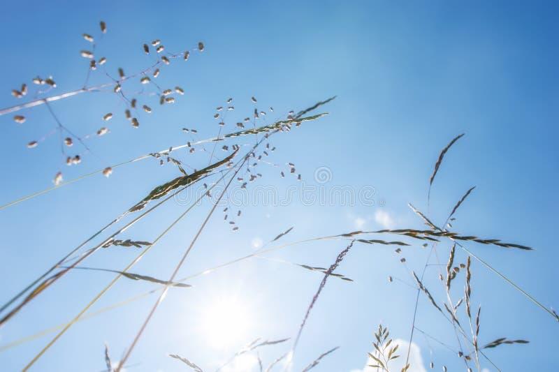 Dia ensolarado surpreendente no prado do verão com wildflowers foto de stock