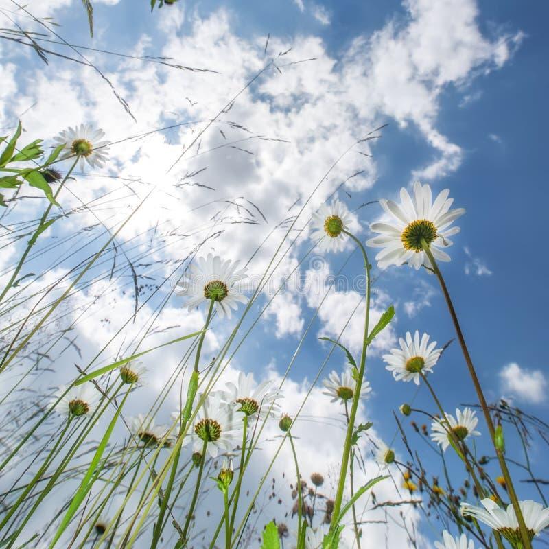 Dia ensolarado surpreendente no prado do verão com wildflowers fotos de stock