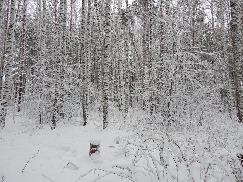 Dia gelado em Sibéria imagens de stock