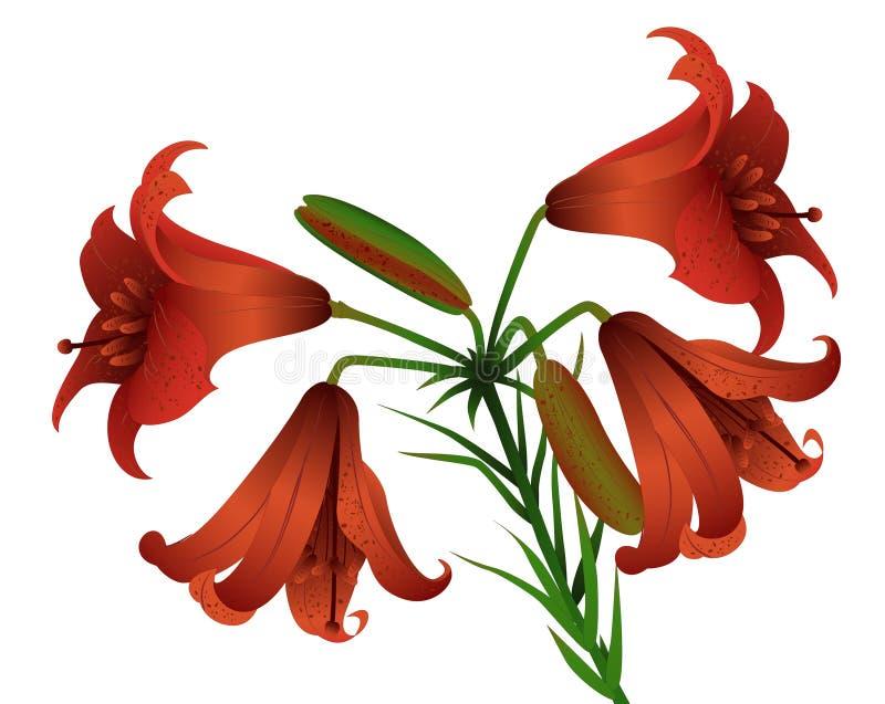 Dia-lírio vermelho ilustração stock