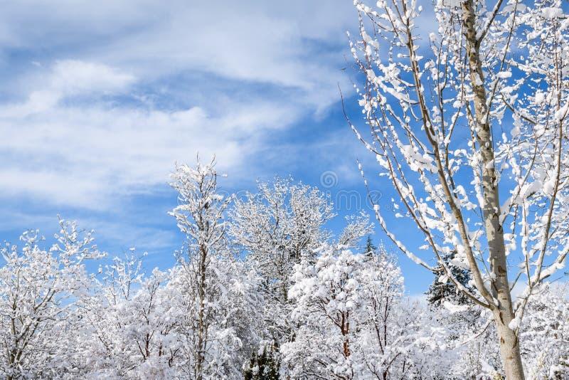 Dia nevado bonito, partes superiores decíduos e sempre-verdes cobertos de neve da árvore contra um céu azul e umas nuvens brancas fotos de stock
