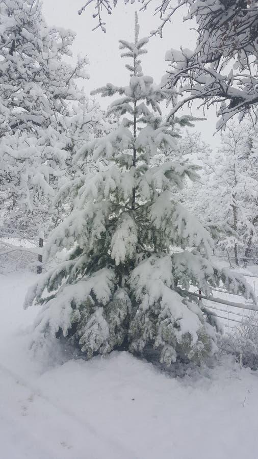 Dia nevado em Mosier Oregon imagem de stock royalty free