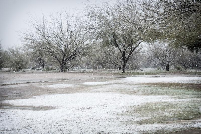 Dia nevado no parque com as árvores do mesquite no Arizona fotografia de stock