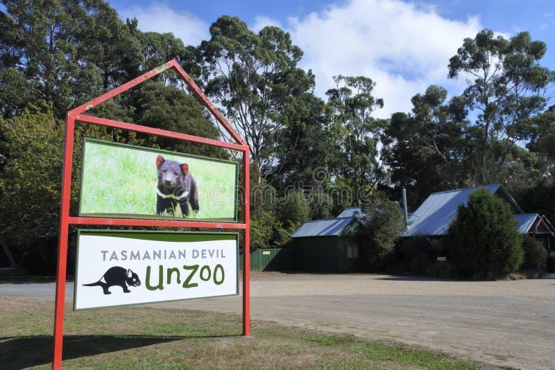 Diabo tasmaniano Unzoo Tasmânia Austrália imagem de stock royalty free