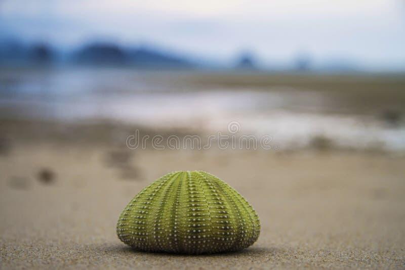 Diabrete de mar de Marco foto de stock royalty free