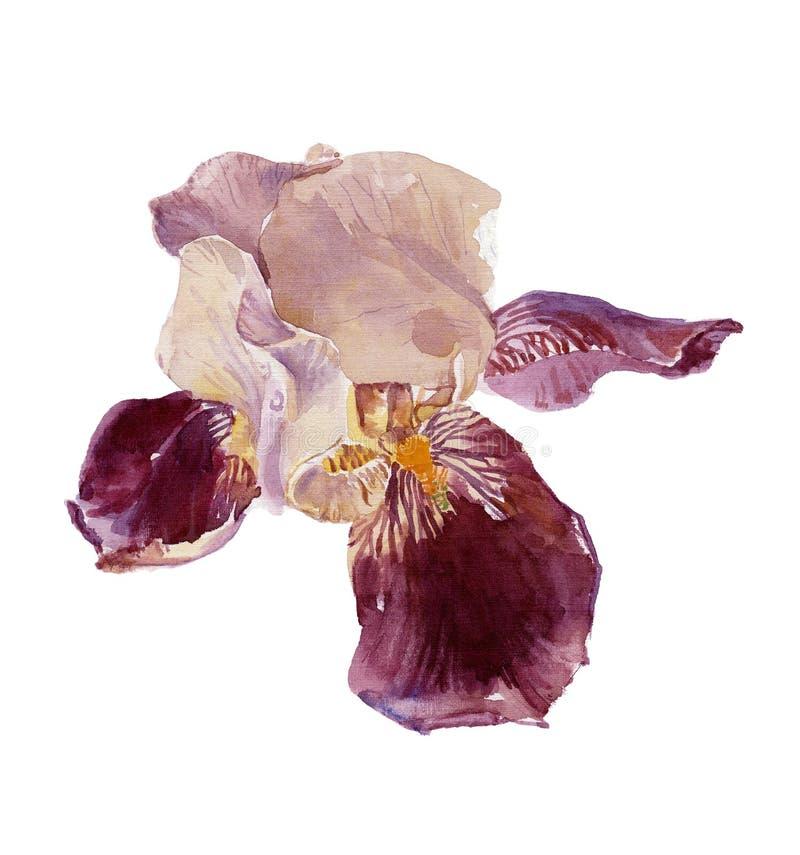 Download Diafragma stock de ilustración. Ilustración de fleur, temprano - 7287594