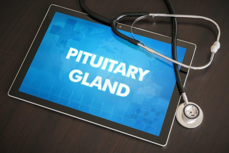 Diagnóstico pituitário co médico da glândula (doença da glândula endócrina relativa) foto de stock royalty free
