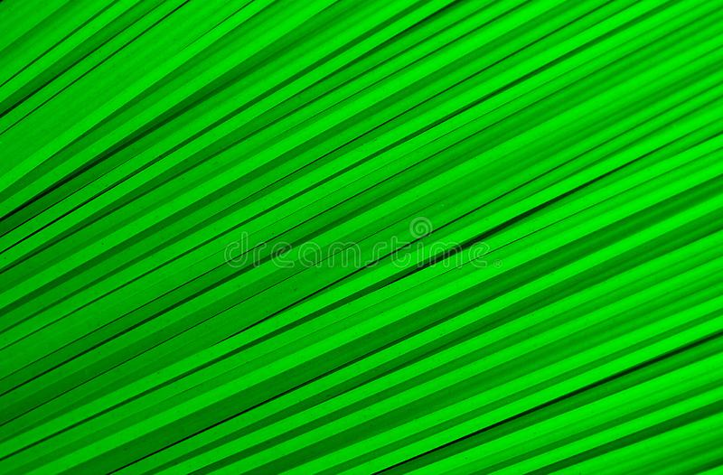 The texture of many stripes is diagonally green. Diagonal, background, pattern, abstract, lines, , geometric, texture, line, design, stripes, modern, graphic vector illustration
