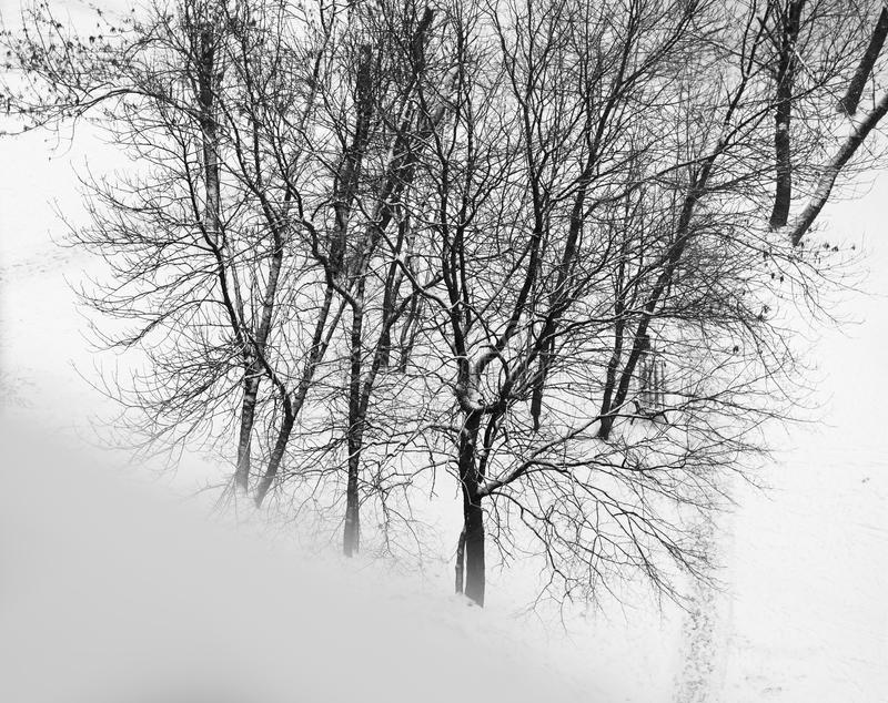 Diagonal black and white winter windowsill with trees background. Hd royalty free stock photos