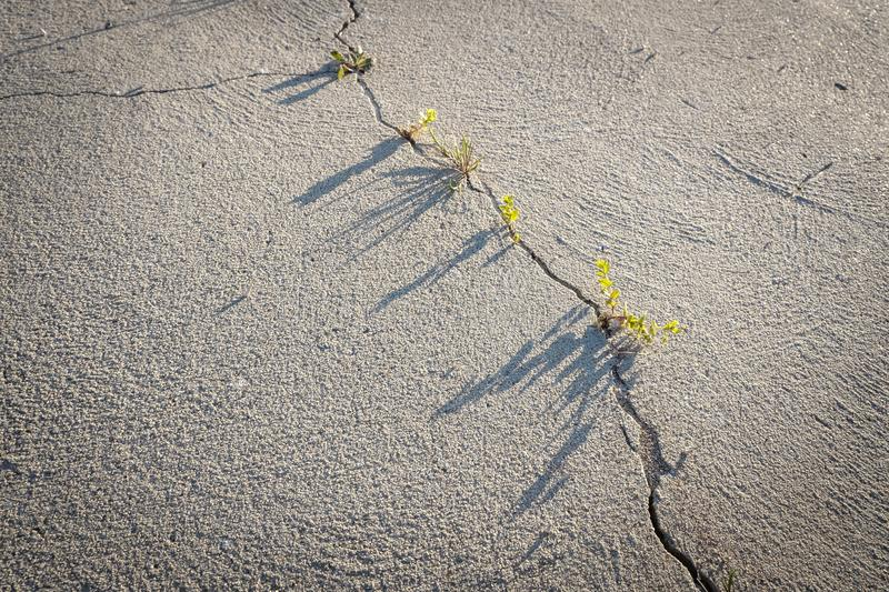 There`s a crack in everything. Diagonal crack in dry sand surface, full frame, copy space, weeds growing, beautiful light royalty free stock photos