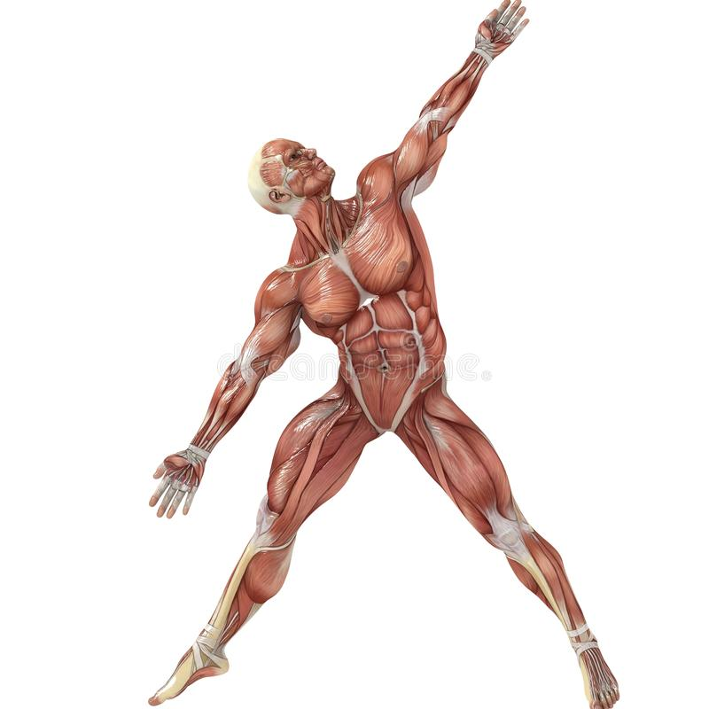 Diagonal. A male model showing the muscles and his flexibility royalty free illustration