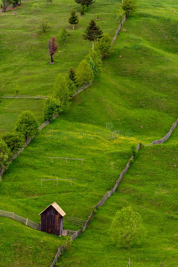 Diagonale samenstelling van ruwe groene bomen en een schuur in Bucovina, Roemeni? royalty-vrije stock foto's