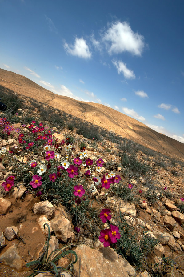 Diagonale Wüste lizenzfreie stockfotos