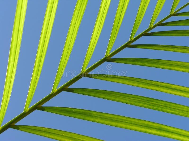 Diagonales Blatt stockfotografie