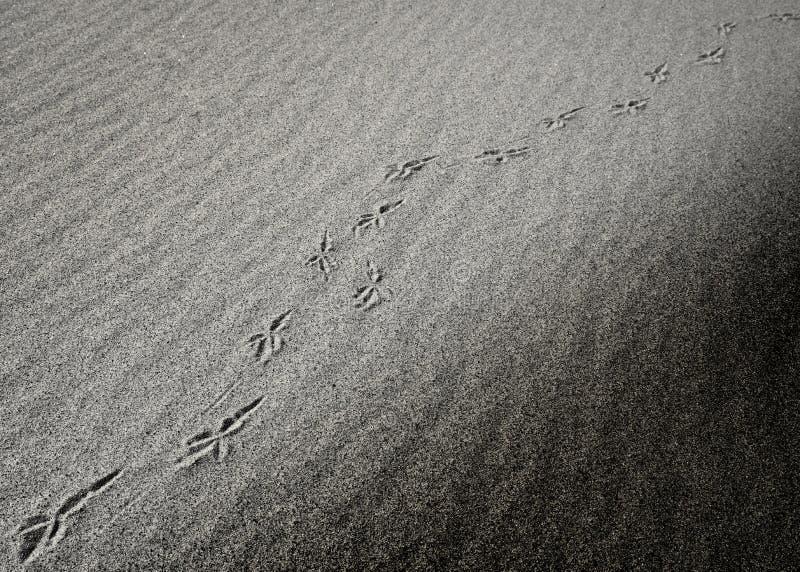 Diagonalni czarny i biały piasków odciski stopy zdjęcie stock