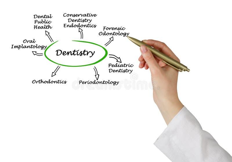 Diagram av tandläkekonst vektor illustrationer