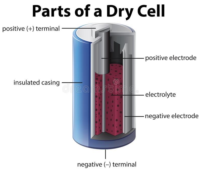 Diagram die binnen van batterij tonen royalty-vrije illustratie