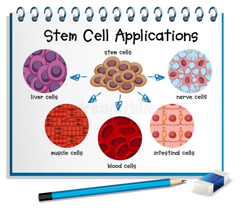Diagram die de verschillende toepassingen van de stamcel tonen stock illustratie
