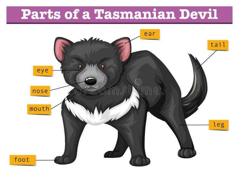 Diagram die delen van Tasmaanse duivel tonen royalty-vrije illustratie