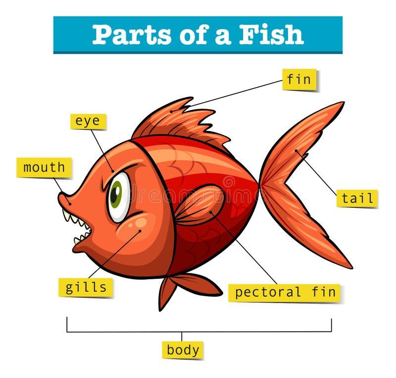 Diagram die delen van vissen tonen royalty-vrije illustratie