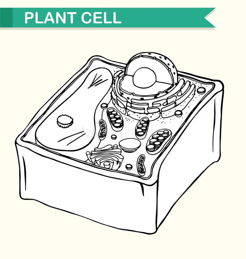 Diagram die installatiecel tonen vector illustratie