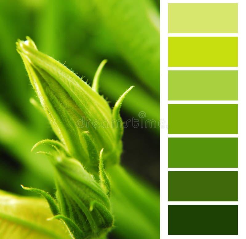 Diagram för grön färg för zucchini royaltyfri foto