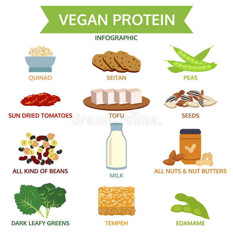 Diagram för information om strikt vegetarianprotein, symbolsmatvektor, illustration stock illustrationer