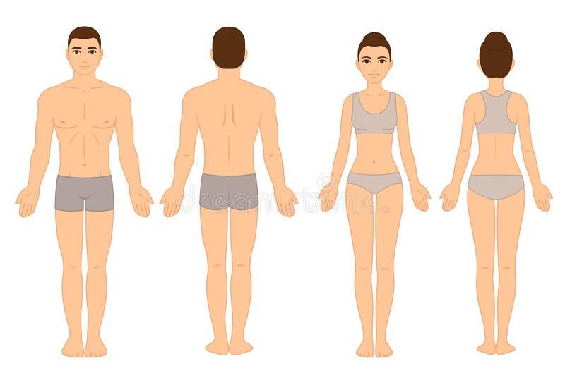 Diagram för man och för kvinnlig kropp royaltyfri illustrationer