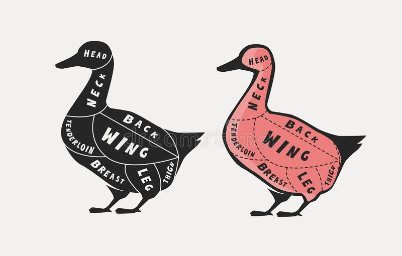 Diagram guide for cutting meat, butcher shop. Duck vector illustration. Diagram guide for cutting meat, butcher shop. Duck vector royalty free illustration