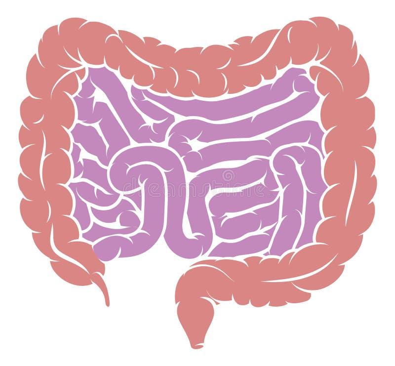 Diagram Kiszkowej żyłki Trawienny system ilustracja wektor