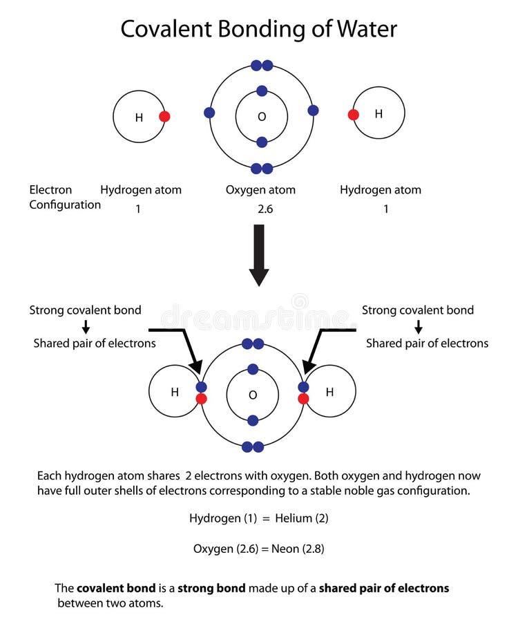 Diagram para ilustrar la vinculación covalente en agua con completamente un laboratorio ilustración del vector