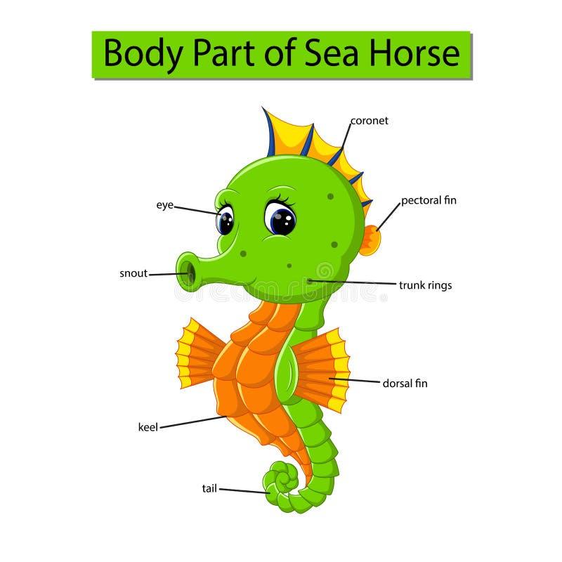 Diagram pokazuje części ciałej denny koń ilustracja wektor