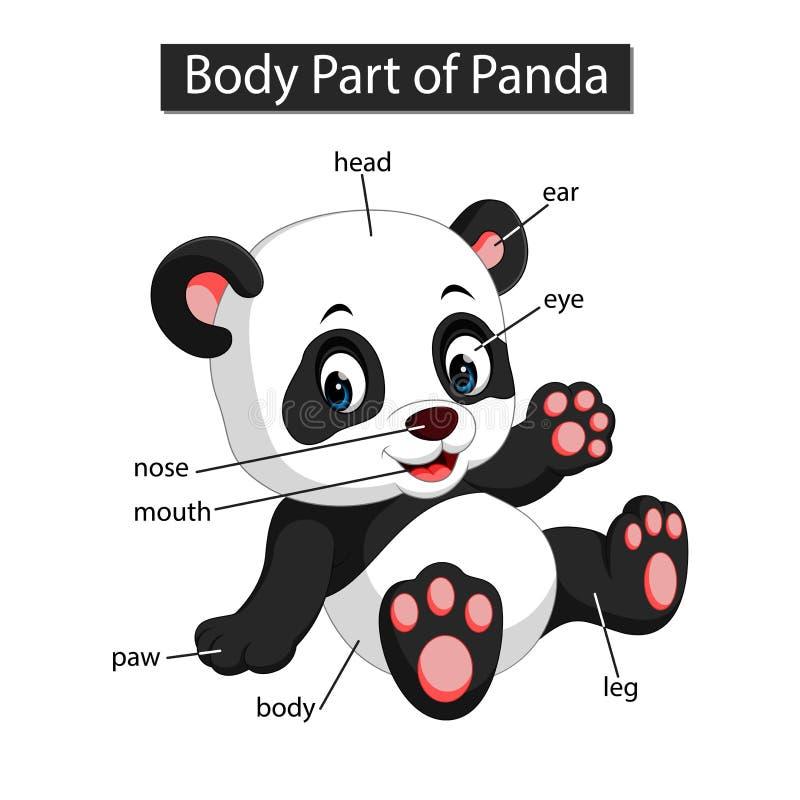 Diagram pokazuje części ciałej panda royalty ilustracja