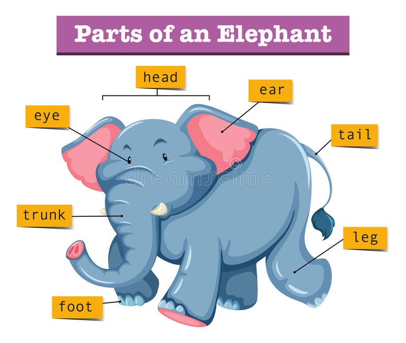 Diagram pokazuje części słoń ilustracji