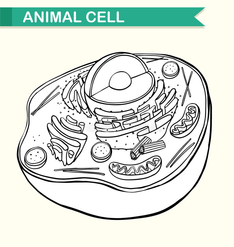 Diagram showing animal cell vector illustration