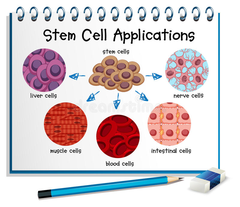 Diagram showing different stem cell applications stock illustration