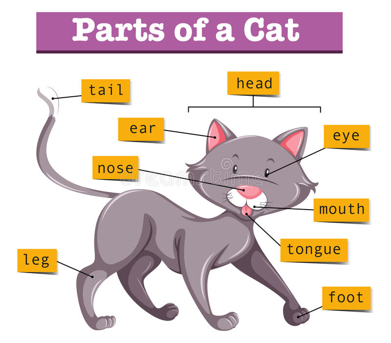 Diagram showing parts of cat vector illustration