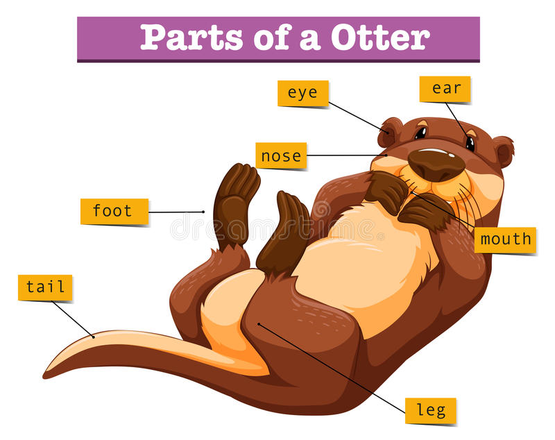 Diagram showing parts of otter. Illustration stock illustration