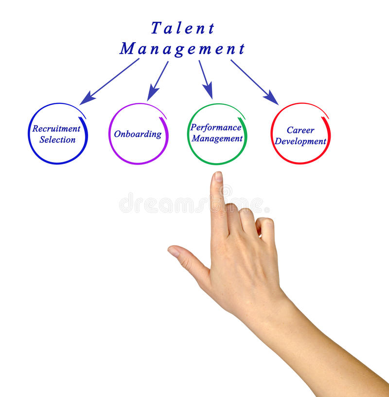 Diagram Of Talent Management Stock Photo Image Of Female Diagram