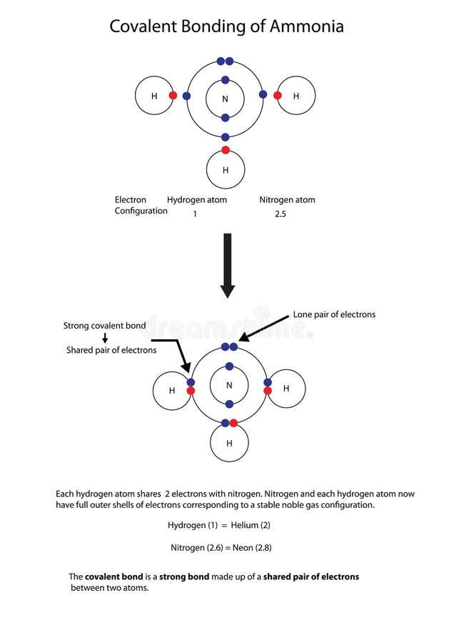 Diagram to illustrate covalent bonding in amonia with a fully la. Diagram showing covalent bonding in amonia with a fully labelled diagram, indicating the vector illustration